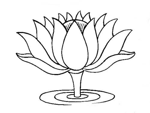 500x376 Sketch Clipart Lotus Plant'10738