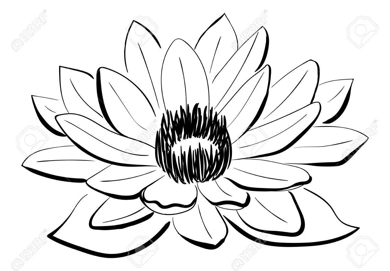 1300x905 Vector Black And White Lotus Flower Drawn In Sketch Style. Line