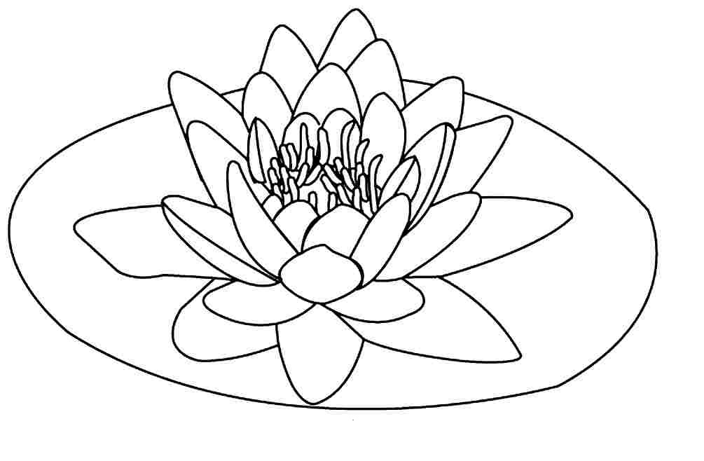 Lotus Flower Drawing Step By Step At GetDrawings.com