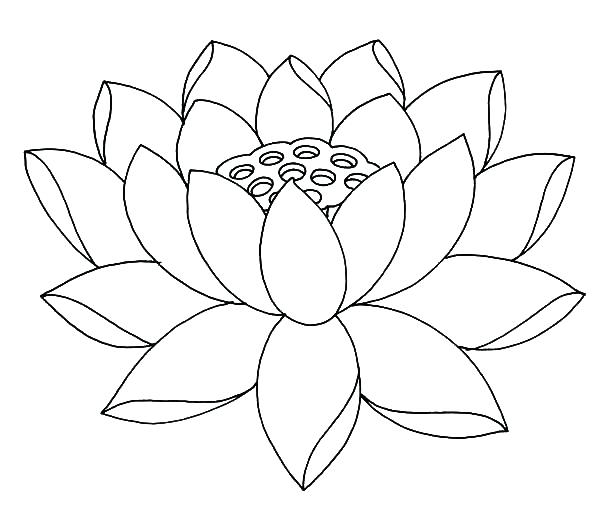 600x524 Jasmine Flower Coloring Pages Fully Bloom Lotus Flower Coloring