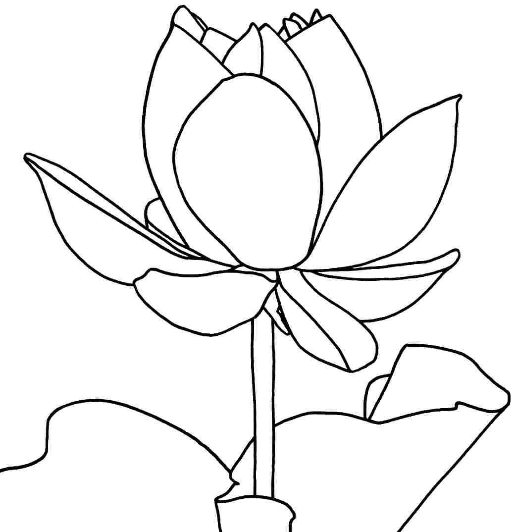 Few Lines On Lotus Flower For Kids Choice Image Flower Wallpaper Hd