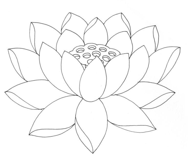 735x642 Gallery Lotus Flowers Drawings,