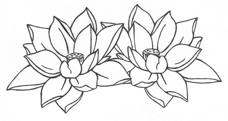 Lotus flower drawing tattoo at getdrawings free for personal 900x480 lotus flower outline free download clip art free clip art on mightylinksfo