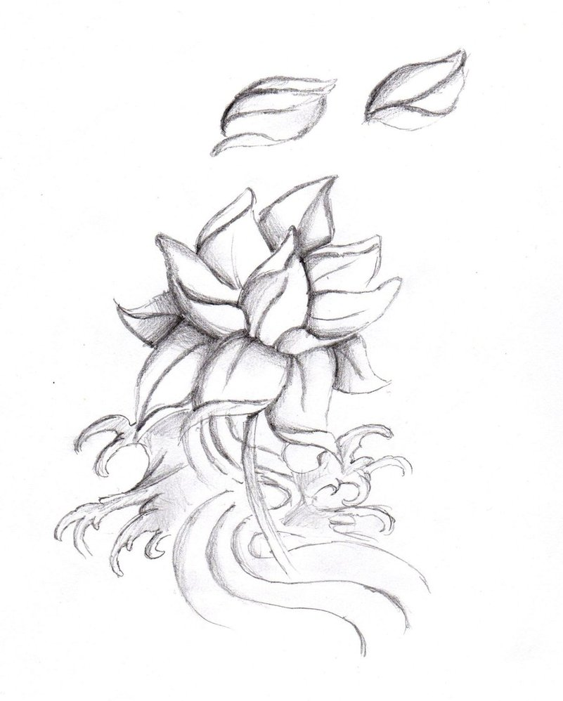 Lotus flower drawing tattoo at getdrawings free for personal 801x998 simple lotus flower tattoo designs ideas love those nails mightylinksfo