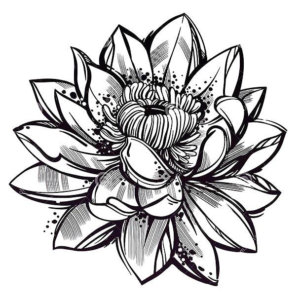 610x610 Style Lotus Flower Tattoo Design