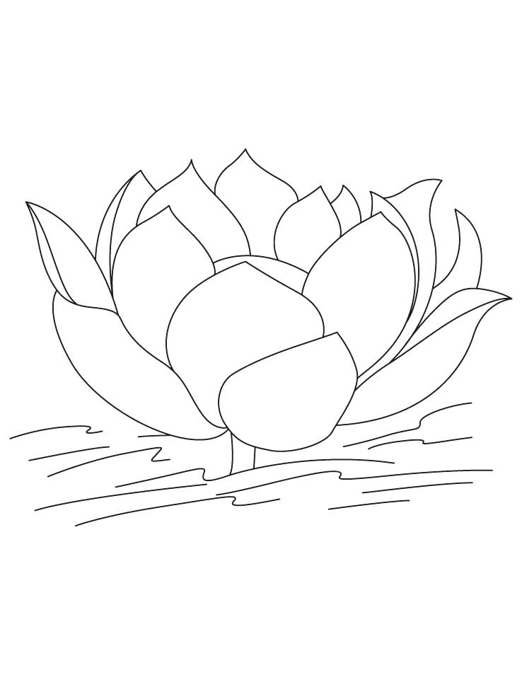 738x954 Lotus Flower Coloring Page Lotus Flower Lotus Flower On The Water