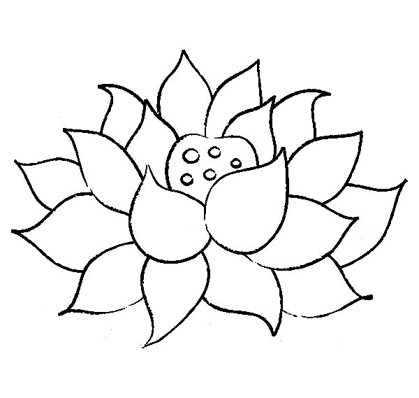 600x569 Lotus Flower Coloring Pages