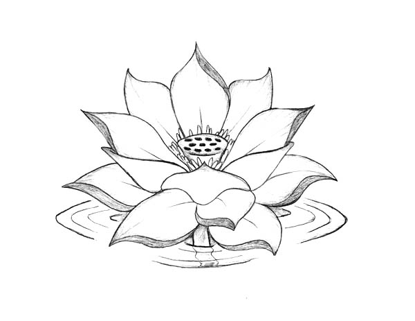 Lotus flower in water drawing at getdrawings free for personal 600x463 lotus flower to colour lotus clipart water drawing pencil and in mightylinksfo