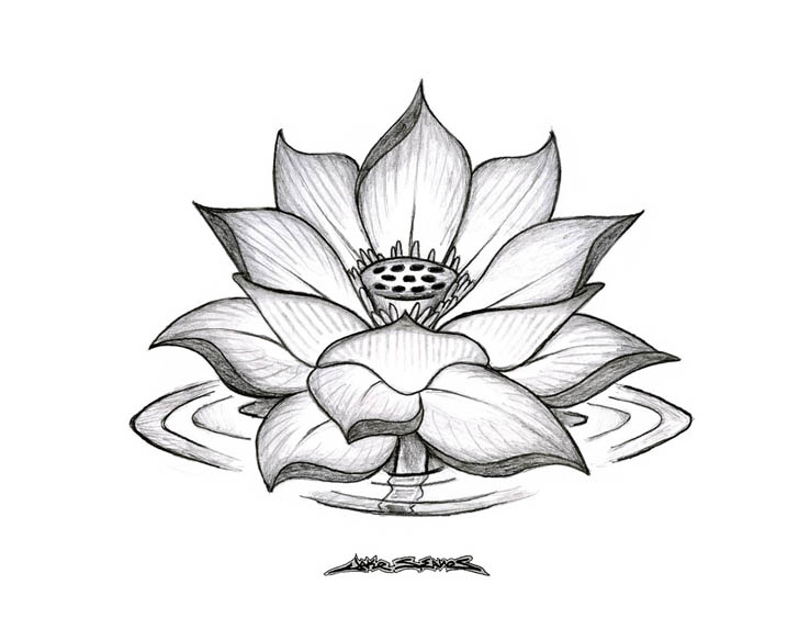 Lotus Flower In Water Drawing At Getdrawings Free For Personal