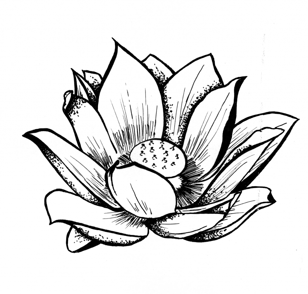 1024x976 Drawings Of Lotus Flower Lotus Flower Line Drawing Lotus Line