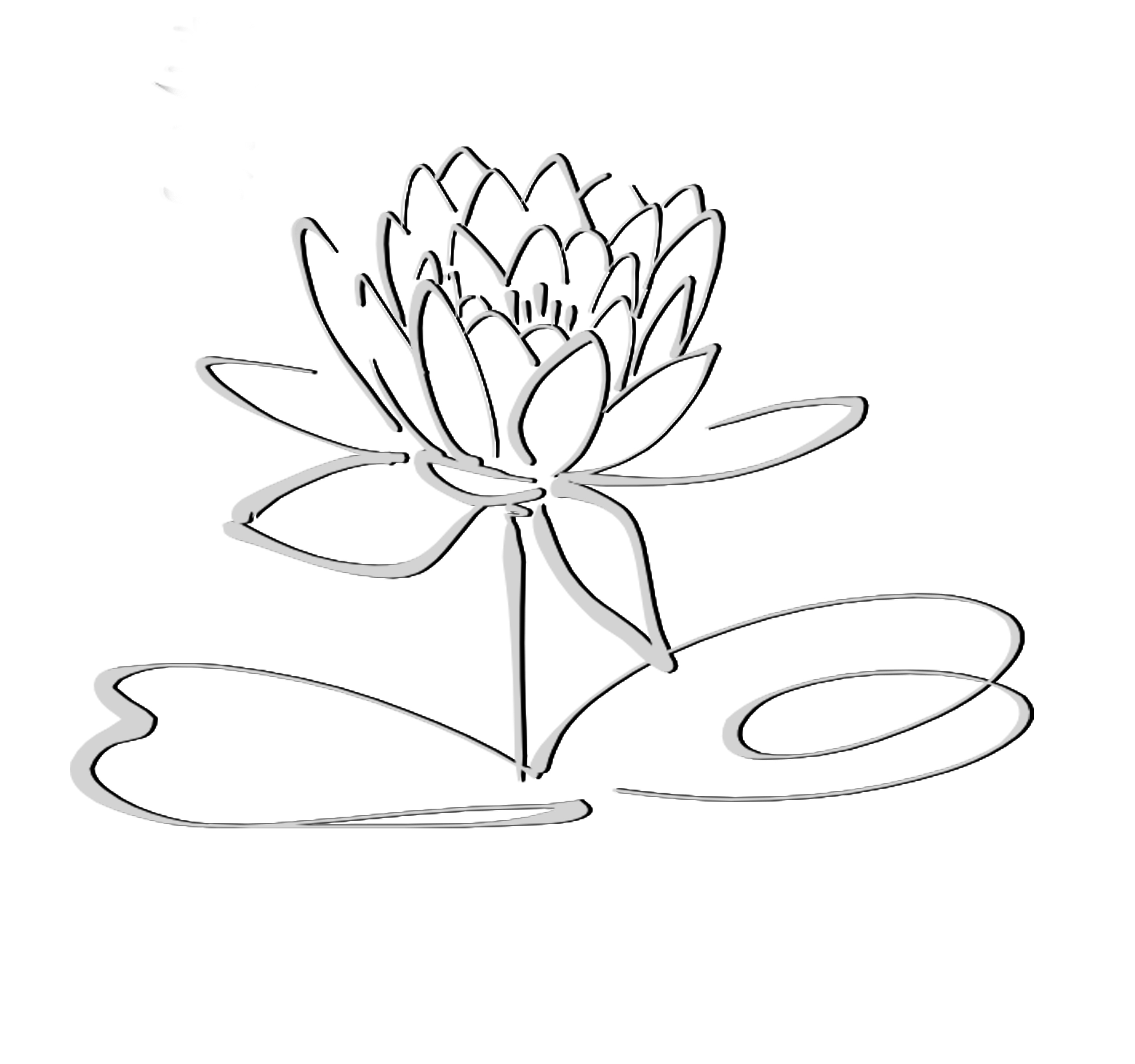 Lotus Flower Pencil Drawing At Getdrawings Free For Personal