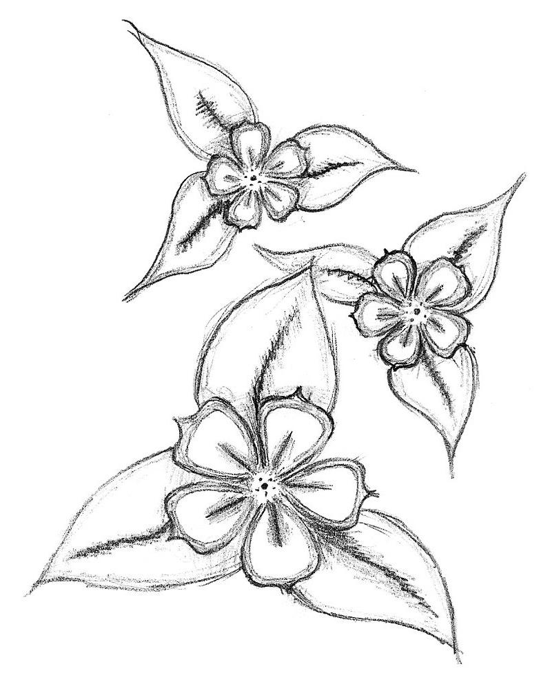 798x1002 Simple Flowers Drawings In Pencil Lotus Flower Drawing