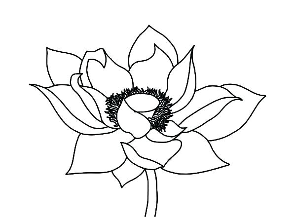 600x440 Flower Color Pages Also Draw Lotus Flower Coloring Pages Free