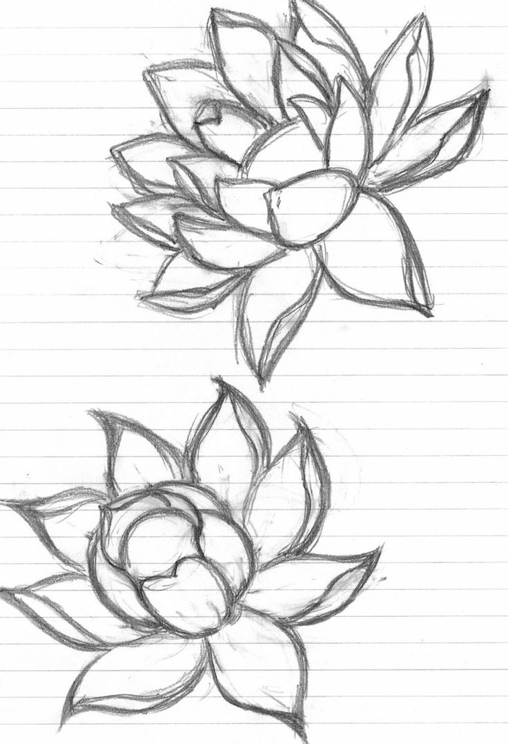 736x1077 Flower Sketch Drawing Image