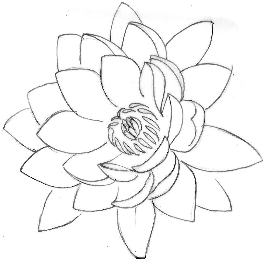 928x888 Gallery Lotus Flower Line Drawing,