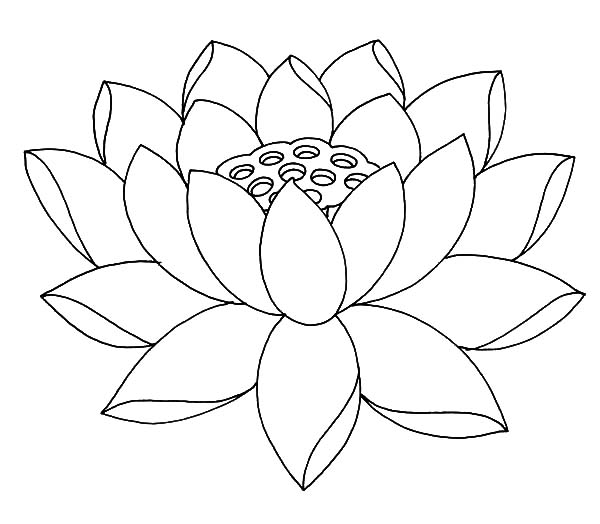 600x524 Lotus Coloring Pages Preschool For Pretty Page Draw Printable
