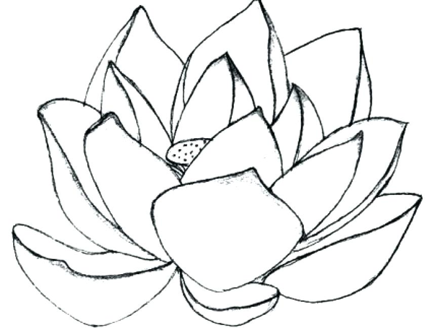 863x648 Lotus Flower Coloring Page Drawing Lotus Flower Coloring Pages