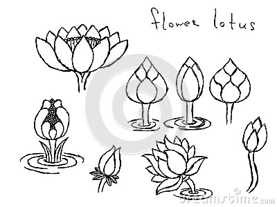400x300 Pencil Drawing Lotus Stock Photos, Images, Amp Pictures (50 Images