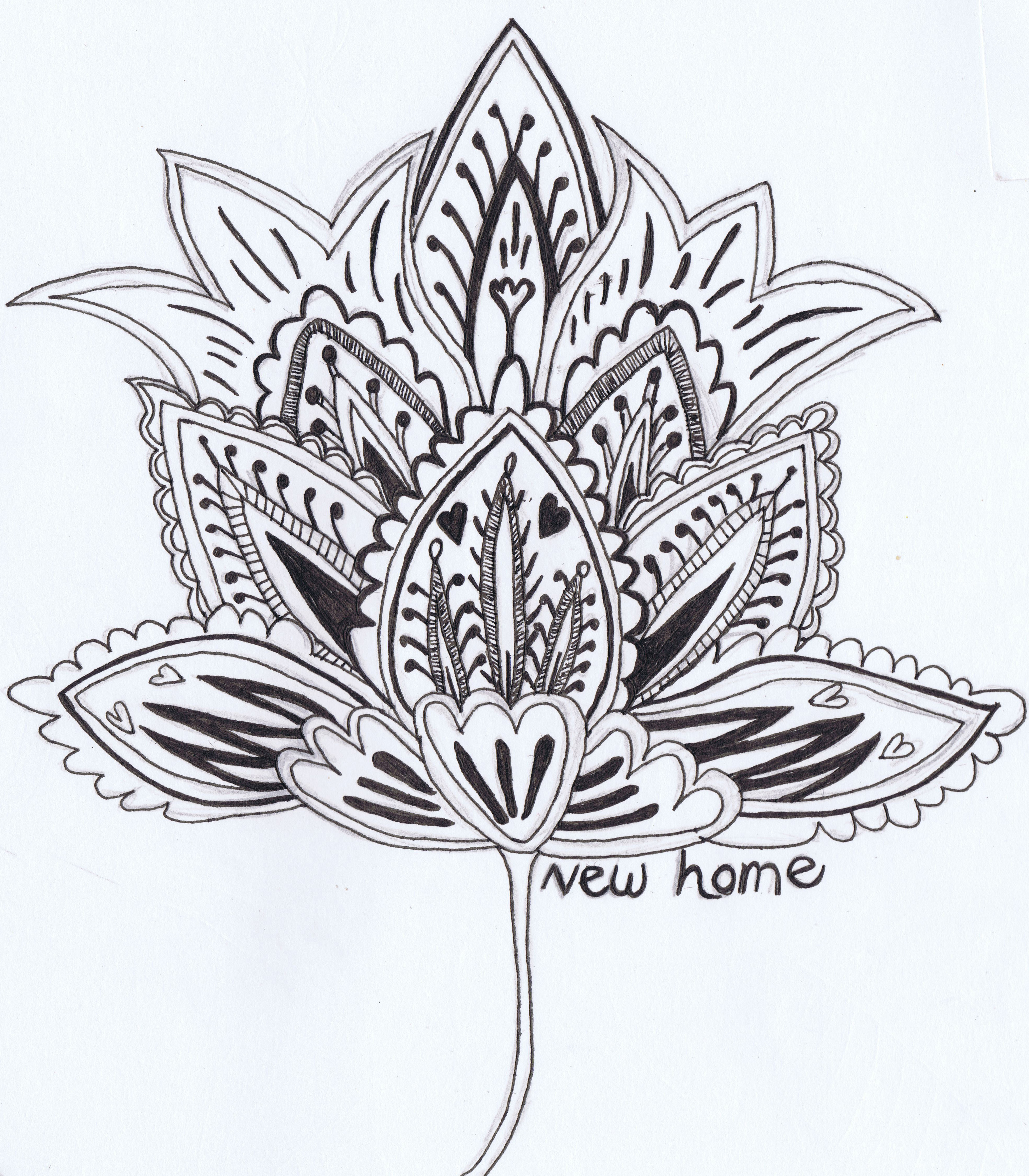 3934x4496 Set Of Hand Drawn Flower Sketches Rose And Lotus Isolated Save