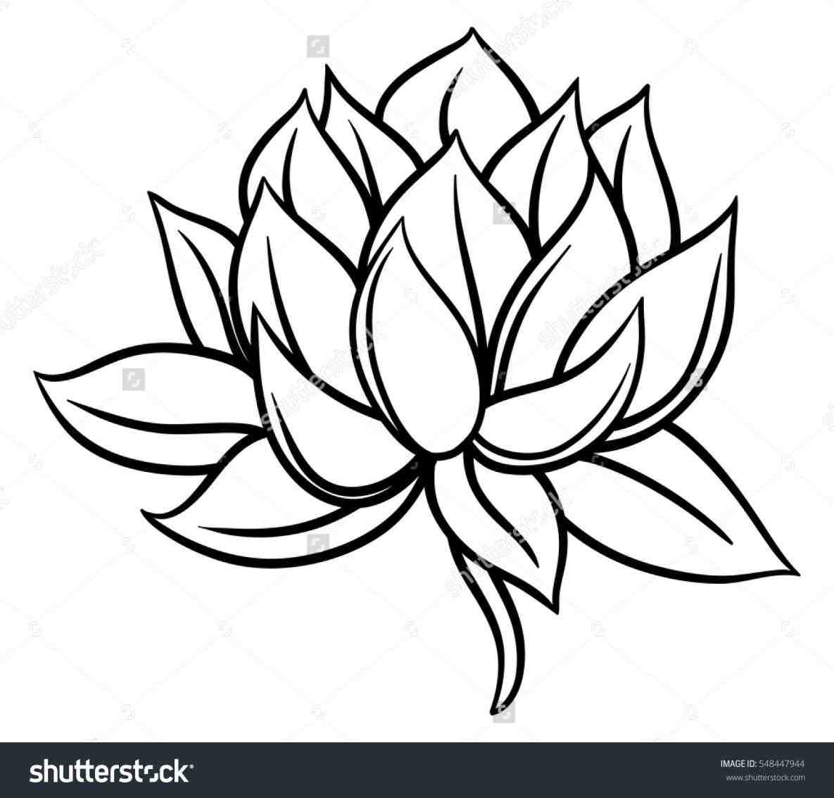 Lotus Images Drawing At Getdrawings Free For Personal Use