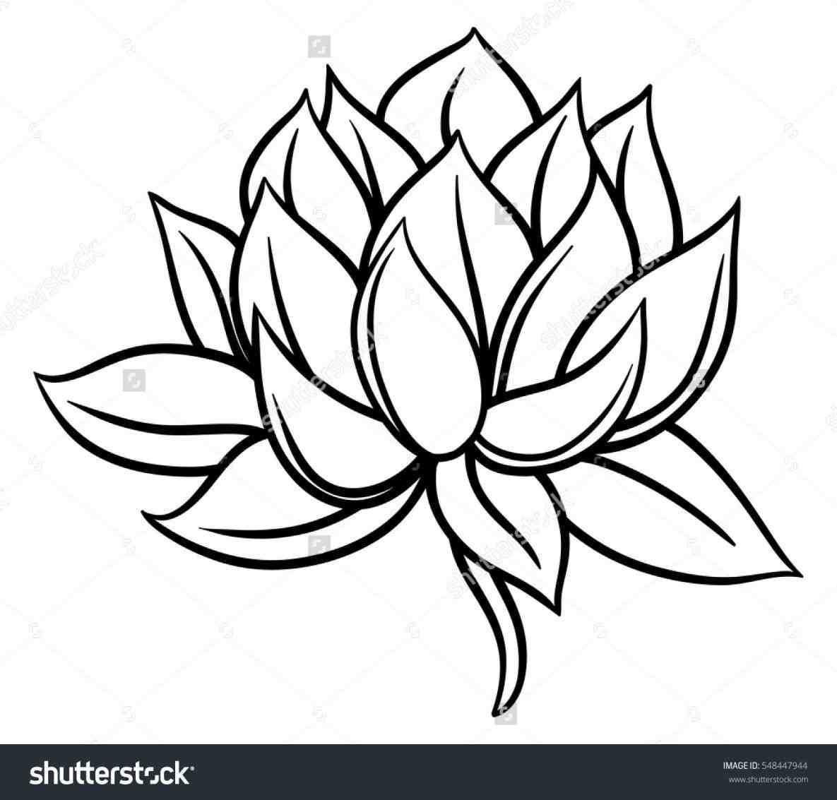 1185x1133 Black Lotus Drawing