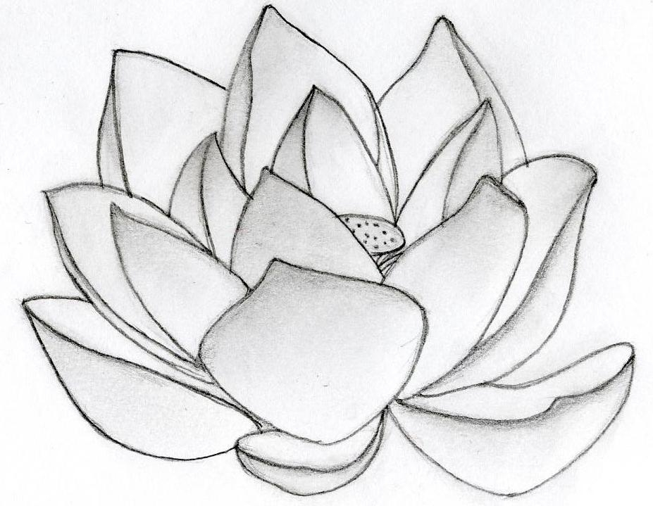 927x719 Drawing Of Lotus Flower Simple Lotus Drawing How To Draw A Lotus