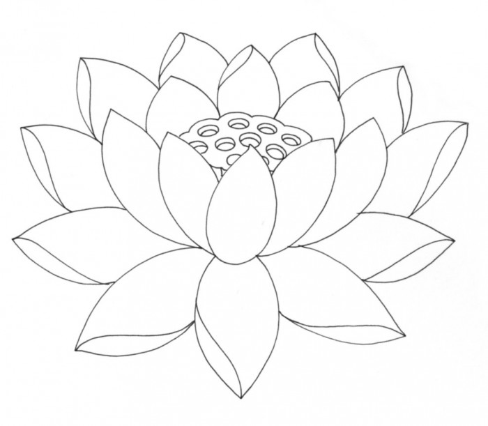 Lotus Leaf Drawing