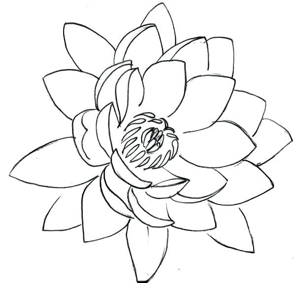 600x574 Lotus Flower Coloring Page Drawing Lotus Flower Coloring Pages