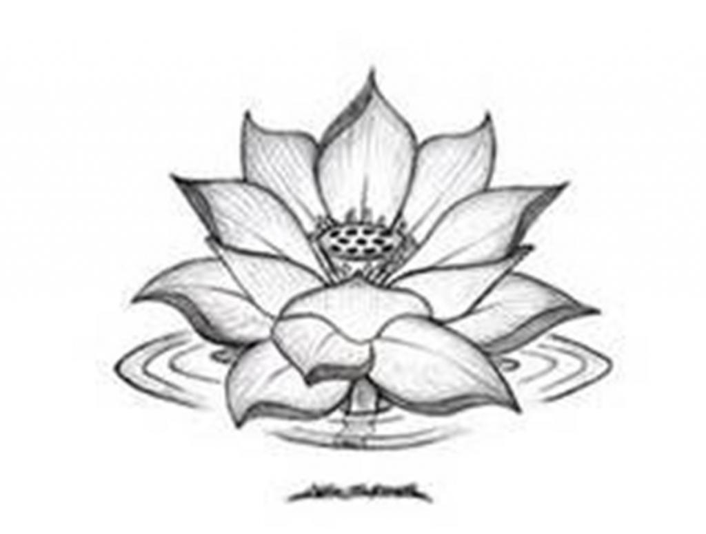 1024x775 Lotus Flower Drawing Black And White Drawing Of Lotus Flower