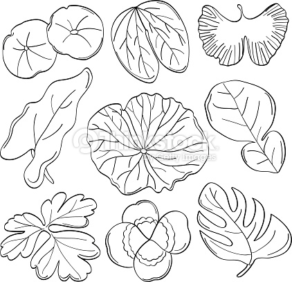 422x407 Lotus Leaf Clipart Black And White
