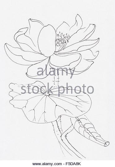 371x540 Lotus Leaves Watercolor Painting Original Stock Photos Amp Lotus