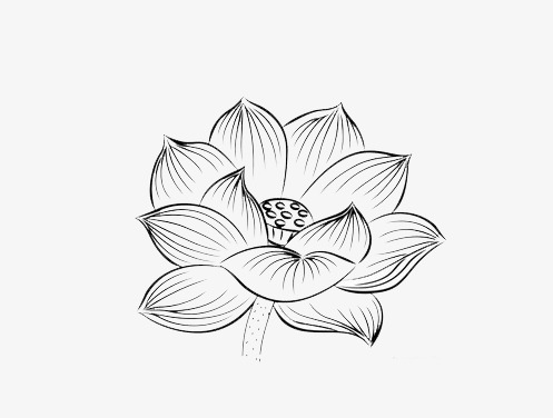 497x376 Black And White Lotus Ornament, Lotus, Black And White, Lotus Leaf