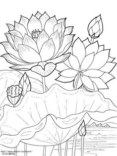 236x314 Vector Set Of Hand Drawn Lotus Flowers And Leaves. Sketch Floral