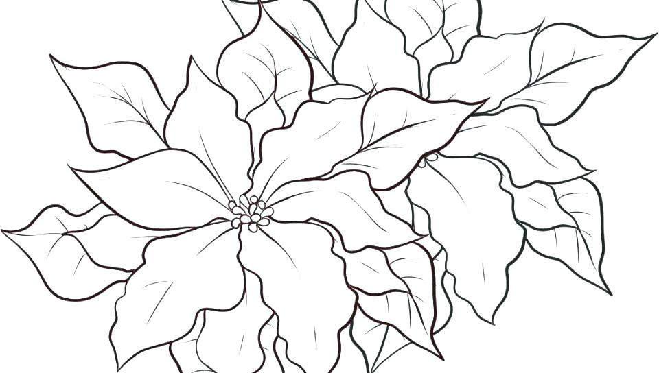 960x544 Lotus Flower Coloring Page Synthesis.site