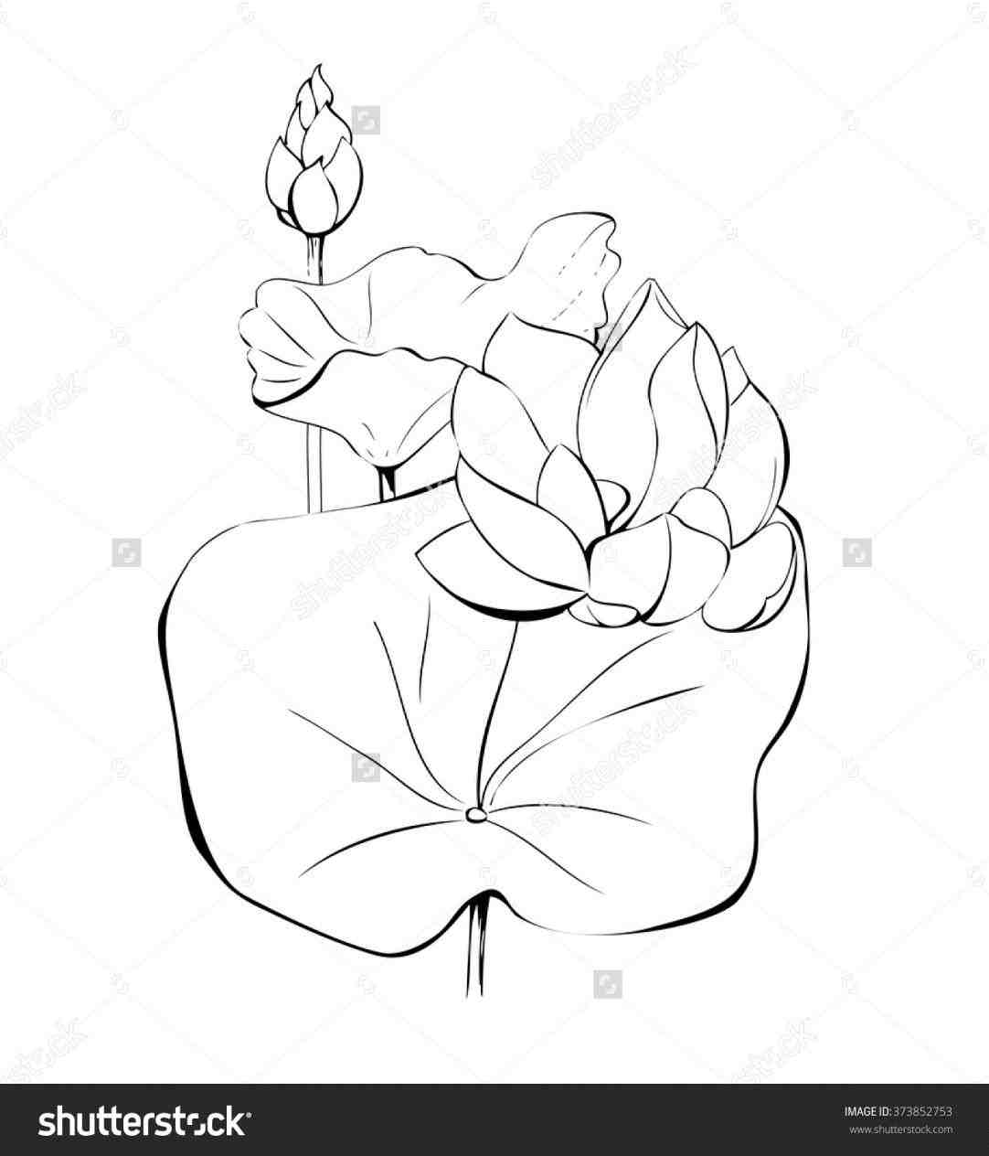 1082x1264 Lotus Leaf Drawing