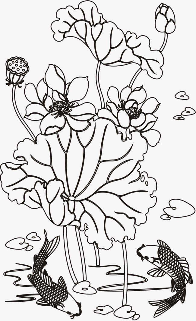 650x1065 Draw Lotus And Carp Quickly, Flowers And Plants, Lotus, Lotus Leaf