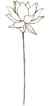 200x420 Drawn Lotus Lotus Plant