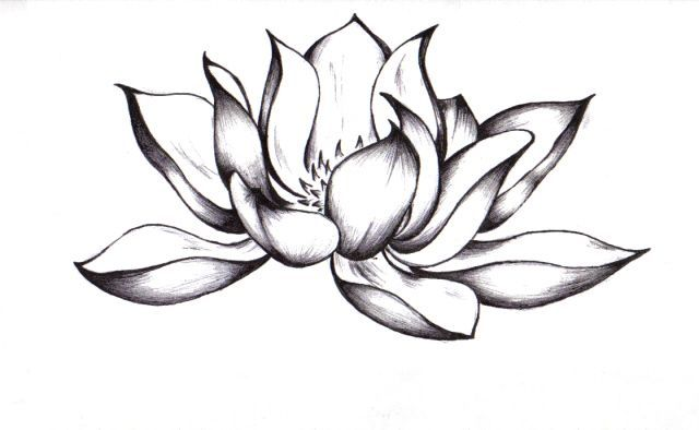 640x394 How Draw A Lotus Flower Tattoo Design How