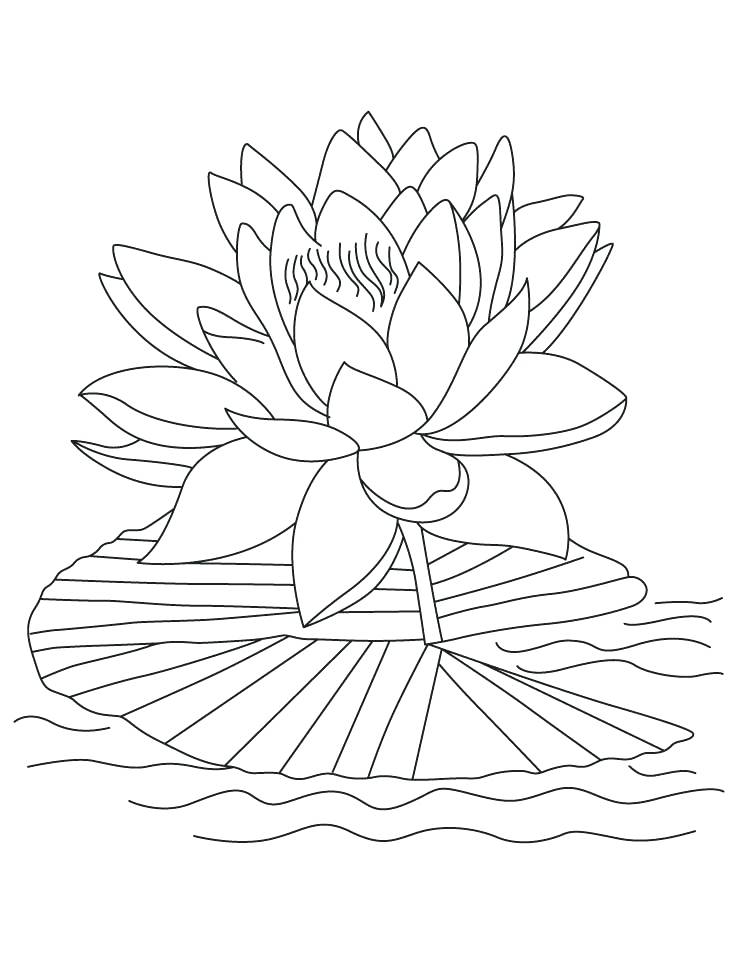 738x954 Intricate Flower Coloring Pages Lotus Coloring Pages To Print