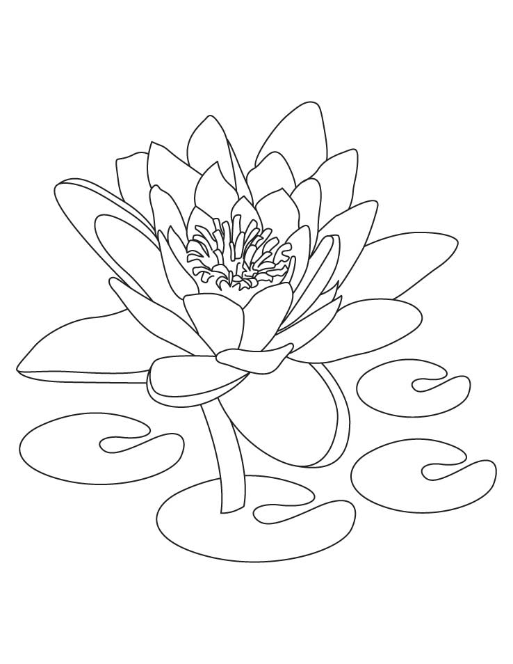 738x954 Lotus Coloring Pages Preschool For Pretty Page Draw Printable