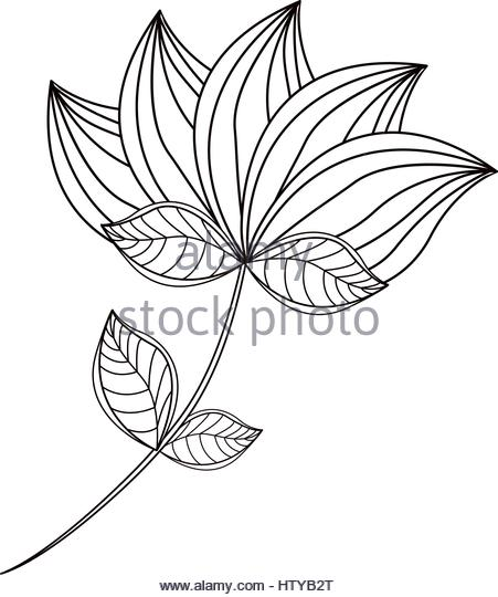 451x540 Lotus Flower Drawing Isolated Icon Stock Photos Amp Lotus Flower