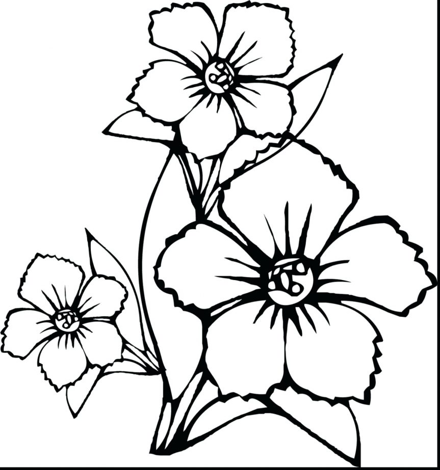 863x923 Astounding How To Draw Flower Coloring Page With Pages Of Flowers