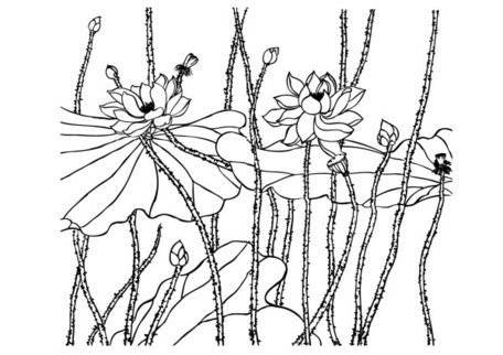 456x322 Lotus Line Drawing, Vector Images