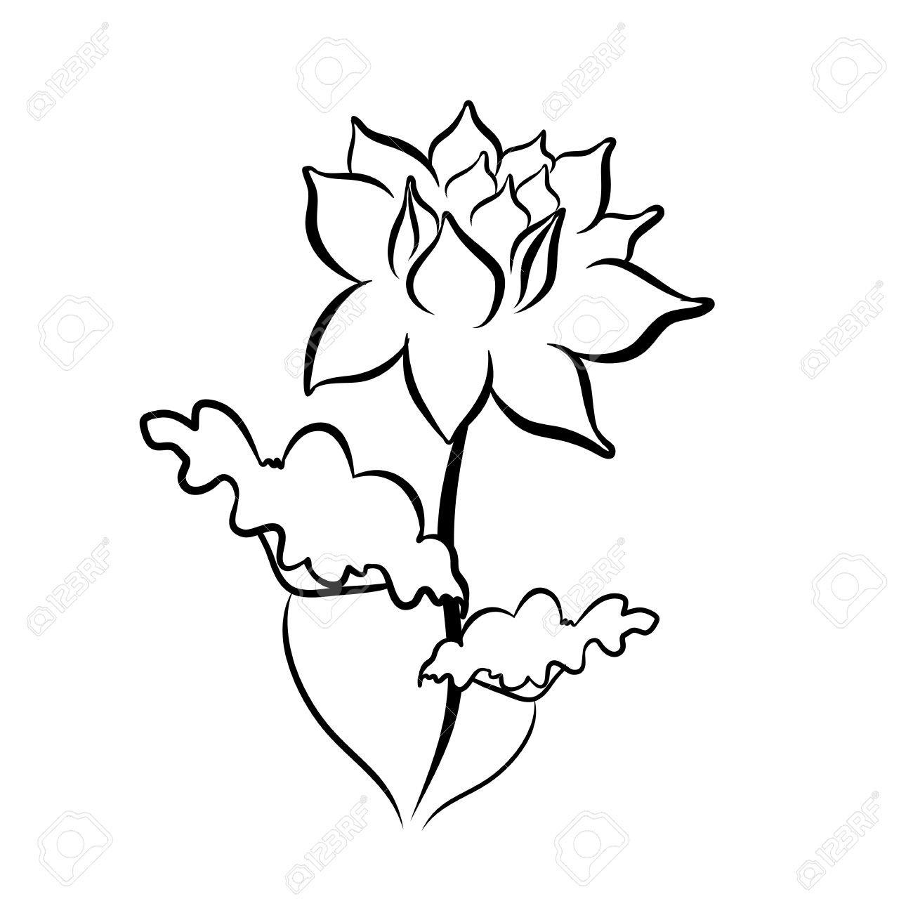 1300x1300 Sketch Line Drawing Of Lotus Flower Isolated Illustration