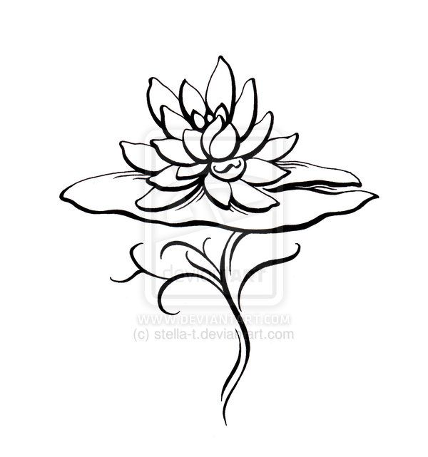 600x641 Drawn Lotus Lily Pad Flower