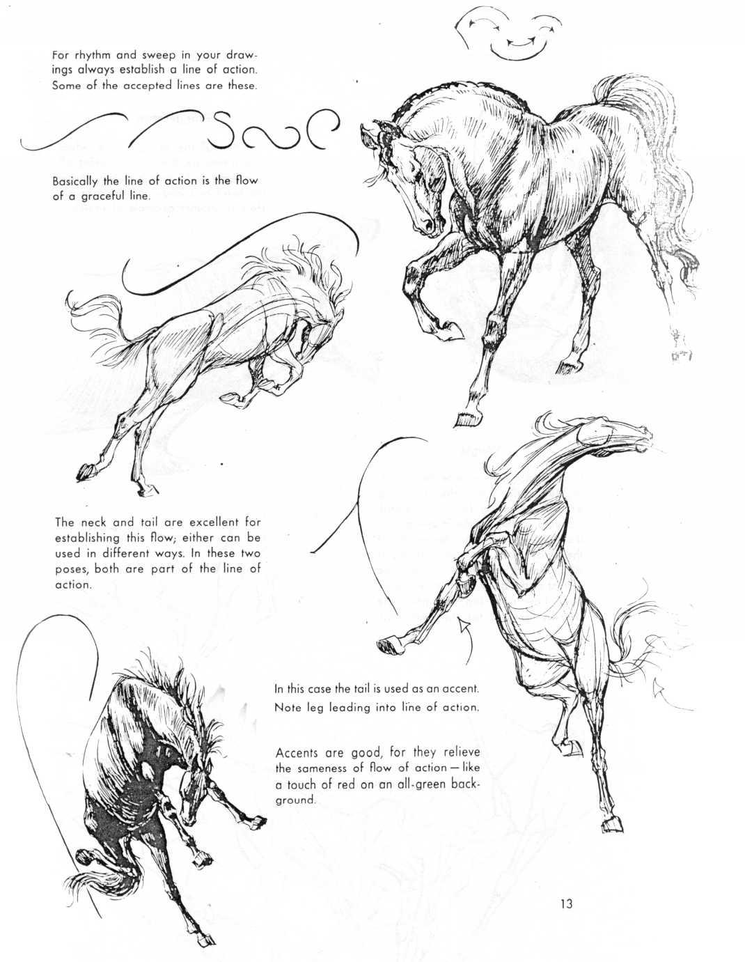 1070x1381 Amarilloo Blackbackedjackal If You Love Animal Drawings