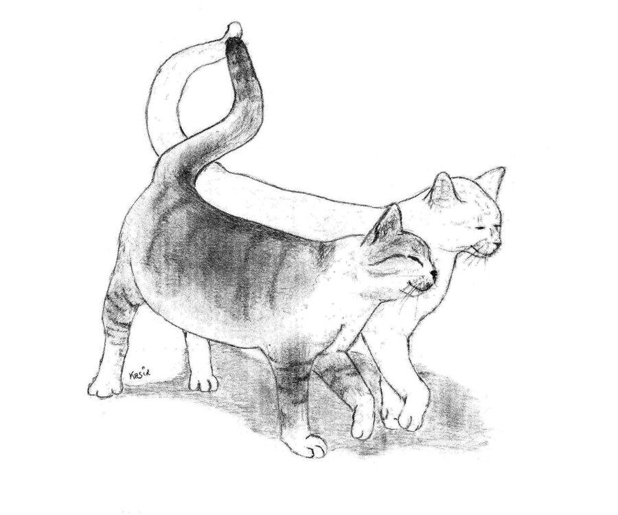 900x749 Cats Love D By Yashamarupl