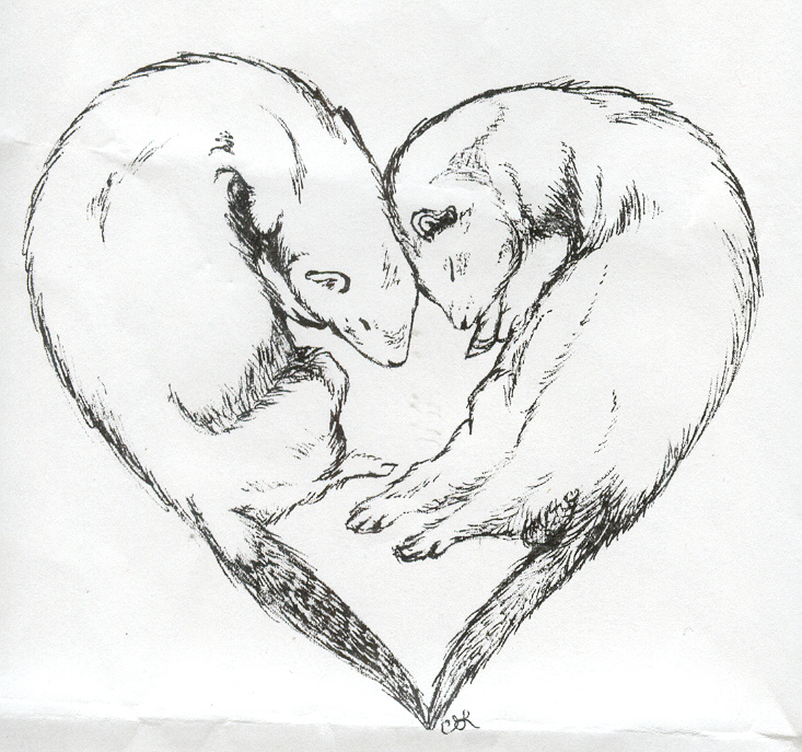 733x687 Ferret Love Sketch By Celestialimages
