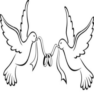 Love Bird Drawing