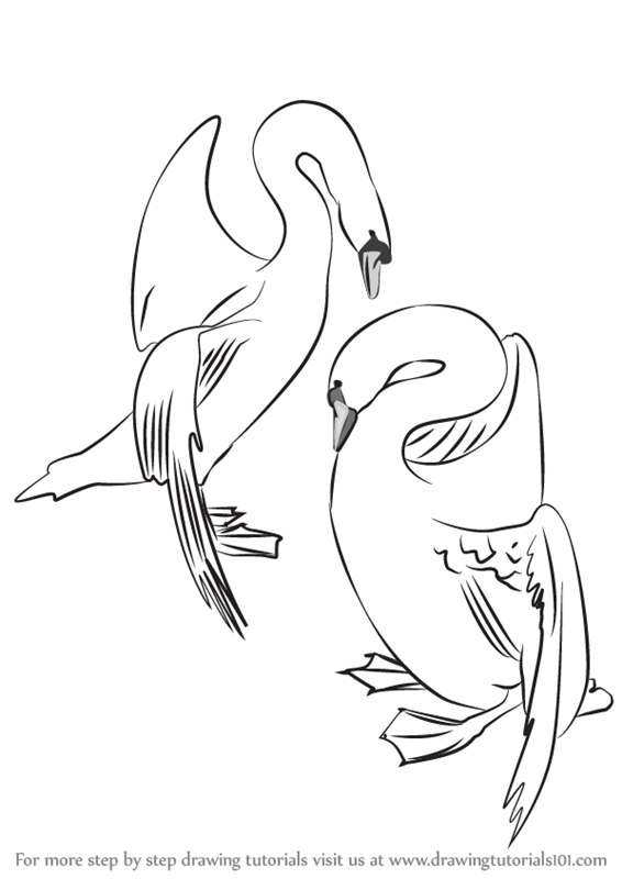 566x800 Learn How To Draw A Swans In Love (Birds) Step By Step Drawing